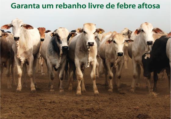 Defesa Agropecuaria gado