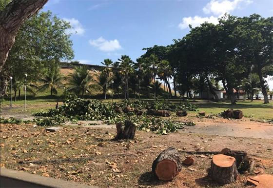 Hotel Tambaú derrubada de árvores